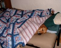 Sleepydogs 005